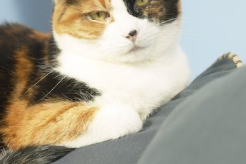 Adverse Reactions to the Deworming Shot in Cats