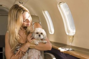 Before traveling with your dog, speak to your veterinarian about preventing altitude sickness.