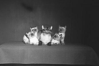 Nutri-Vet Pet-Ease Diffuser Vs. Feliway for Cats