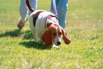 Dog Behavior: Walking in Circles