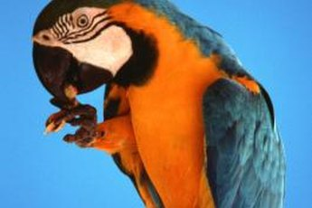 Parrots can eat most people food, but some things may be harmful to them.