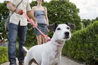 Dogs should walk calmly by their owner's side when on a leash.