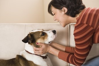 Enzymatic Toothpaste for Dogs