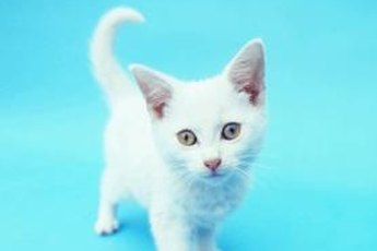 Names can complement your kitty's coloring and personality.