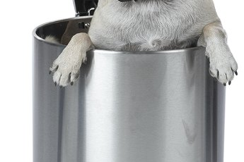How to Get Your Dog to Stop Knocking Over the Trash Can