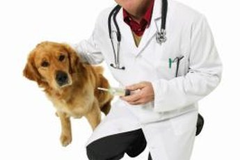 Allergy testing lets your veterinarian develop a custom treatment for your dog.