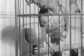 Most chemical cleaners are toxic for your bird.