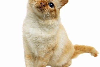 Roundworm Remedies for Cats