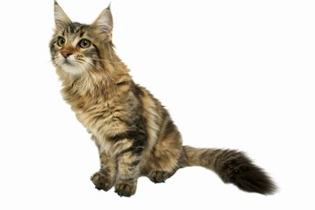How Safe Is Acupuncture for Cats With Leg Problems?