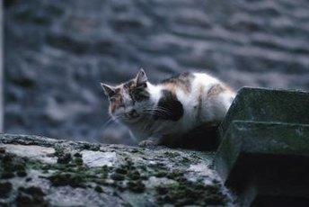 Fleas can be a feral cat's nemesis.