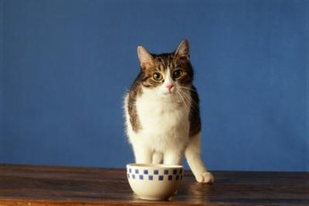 While training Kitty to stay off the table, get in the practice of wiping the surface before meals.