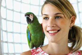 Socialization is an important part of a parrot's daily routine.
