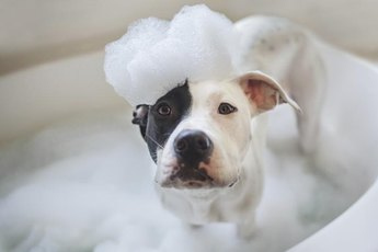 Regular baths can help reduce dog dander.