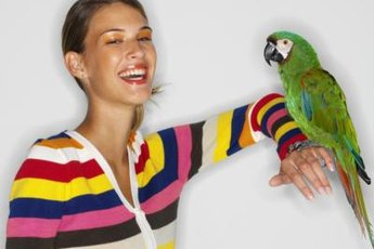 Parrots can be taught to mimic human speech.