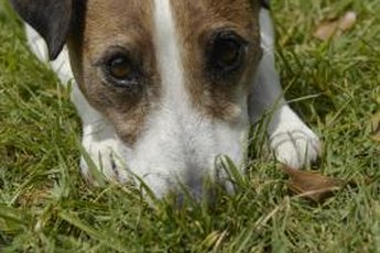 Sniffing helps dogs decide where to do their business.