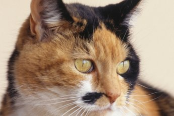 Metronidazole & Sulfasalazine for Giardia in Cats