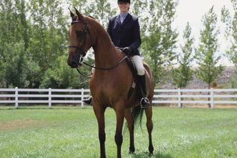 Balimo exercises help riders stay balanced on their horse.