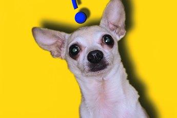 How to Interpret Dog Behavior