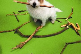 Chewing on wood is natural, but can become dangerous for your pup.