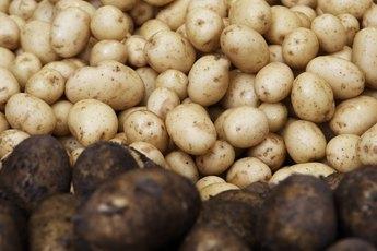 Potato Vs. Rice in Dog Food