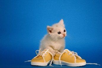 Tips on Teething in Kittens