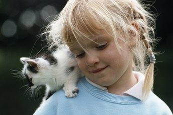 Do Kittens Go through Phases Like Babies?