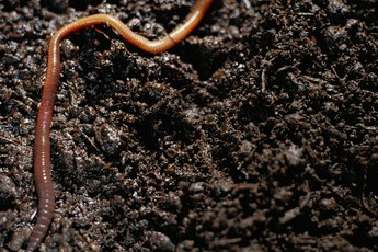 Large-Scale Worm Composting
