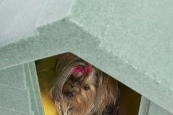 Put toilet training pads in the doghouse during training.