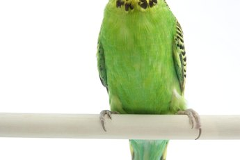 Can I Clean My Parakeet Cage With a Water & Vinegar Solution?