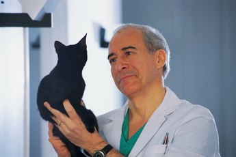 Vaccinations for Leukemia-Positive Cats