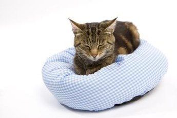 Sciatica can cause serious pain for your pet feline.