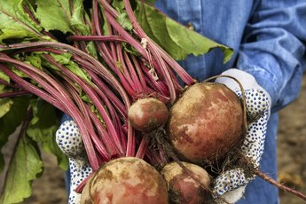 Are Turnips a Starchy Vegetable?