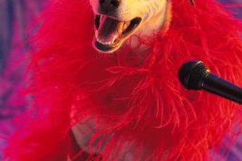 Typically, canine actors need a professional agent to get bookings.