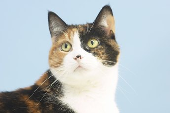 Does Feliway Spray Work on Cats That Defecate Outside Their Box?