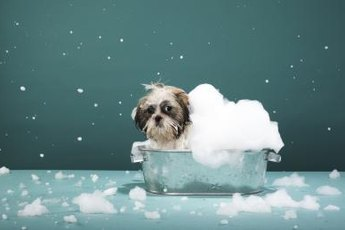 Washing your dog with this homemade shampoo won't strip his fur's natural oils.