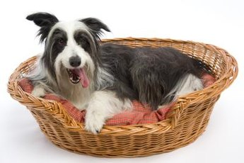You may find that your dog wants to sleep somewhere other than his crate as he matures.