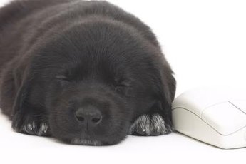 Puppies sometimes have dreams that cause rapid breathing while sleeping.