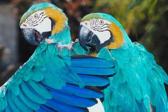 Several Reasons Why Birds Preen Their Feathers