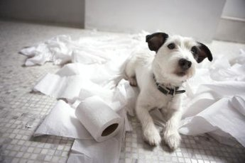 Toilet paper is not a tasty treat, but try telling him that.