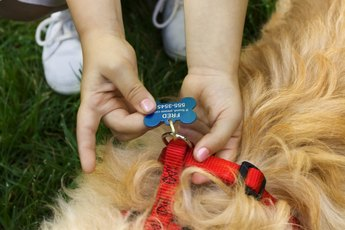 ID Collars With an Elastic Band for Dogs
