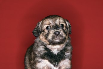 Does a Ticking Clock Help Stop a Puppy From Crying?