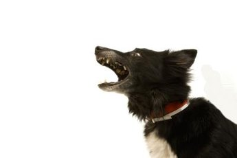 Hear Piper bark, even when you're sleeping.