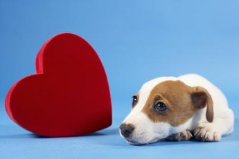 Pawing and licking are just a way for your puppy to say he loves you.