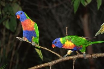 Parrots aren't a type of bird that needs gravel for digestion.
