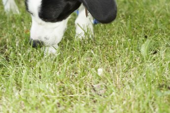 Male Dog & Roaming Behavior
