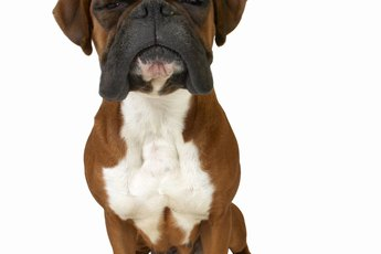 Skin Remedies for Boxers
