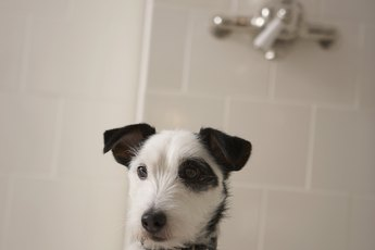 Medicated Shampoo for Dogs