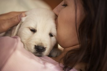 Golden Retriever Puppy Feeding Amounts