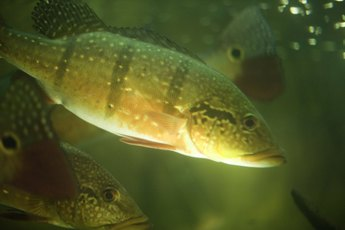 Facts & Tips on Taking Care of Aquarium Fish