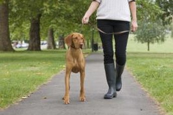 Learn to avoid and protect yourself from aggressive dogs.